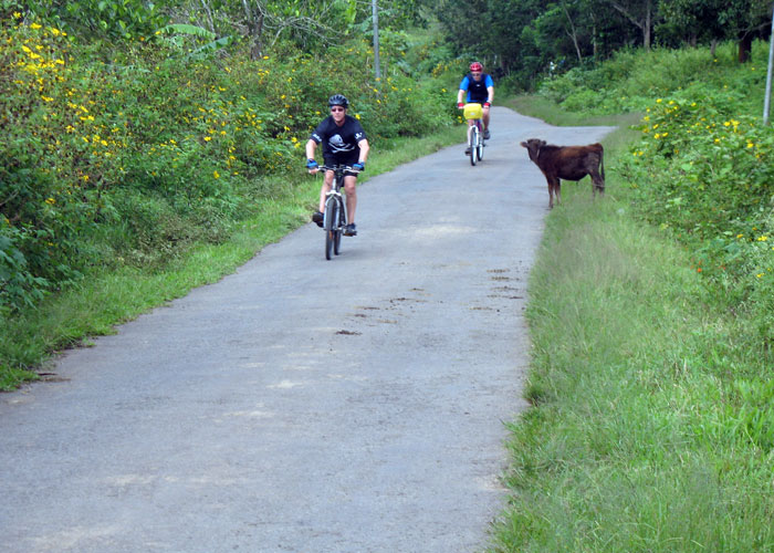 Colourful countryside during cycling from Munnar to Periyar