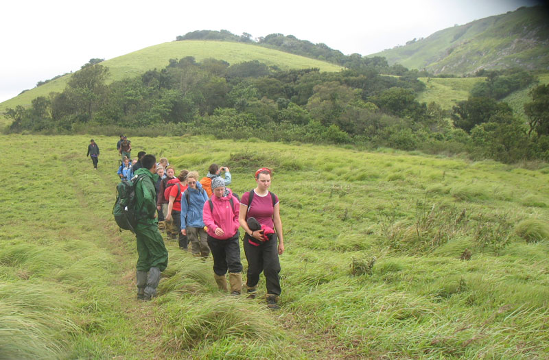 Sholas and Grasslands during trek near Munnar camp
